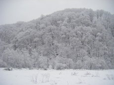 2010_12290024